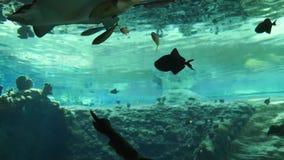 Pesque la vida, niño en museo del mundo subacuático con muchos pescados en el agua azul pura almacen de video