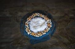 Pesque o fundo digital da fotografia recém-nascida da rede e da concha do mar pro fotografia de stock