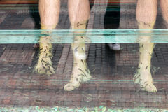 Pesque o tratamento dos cuidados com a pele do pedicure dos pés dos termas com o garra do rufa dos peixes Fotografia de Stock
