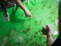 Pesque sacar con pala con la cucharada de papel en el festival Bangkok Tailandia de la noche foto de archivo