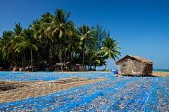 Pesque a secagem pela praia na vila de um pescador Fotografia de Stock