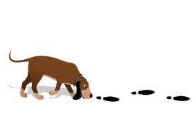 Pesquisa do Bloodhound Imagem de Stock