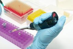 Pesquisa do laboratório da biotecnologia Fotos de Stock