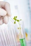 Pesquisa do produto químico da planta fotos de stock royalty free