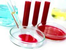 Pesquisa do sangue fotografia de stock royalty free