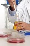 Pesquisa e análise da química Fotografia de Stock Royalty Free