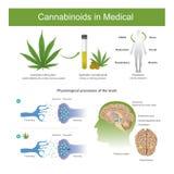 A pesquisa encontrou que a planta indica do cannabis pode ter o follo Foto de Stock Royalty Free