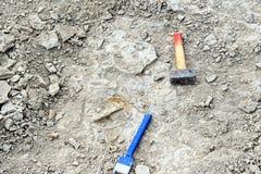 Pesquisa por amonites na pedra calcária Imagens de Stock Royalty Free