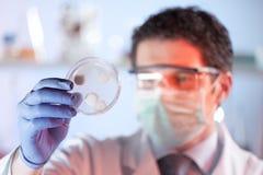 Pesquisador da ciência da vida observando pilhas no prato de petri fotografia de stock