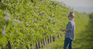 Pesquisador fêmea Using Digital Tablet ao examinar árvores de fruto filme