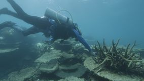 Pesquisadores subaquáticos para recifes de corais video estoque