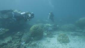 Pesquisadores subaquáticos para recifes de corais vídeos de arquivo