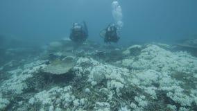Pesquisadores subaquáticos para recifes de corais filme