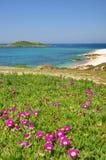 pessegueiro острова Стоковое Изображение RF