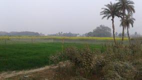 Pessfuli de bonheur en Inde image libre de droits