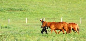 Pessoa com o cavalo dois Fotografia de Stock