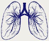 Pessoa dos pulmões Fotografia de Stock Royalty Free