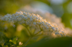 Pessoa-flor Imagens de Stock