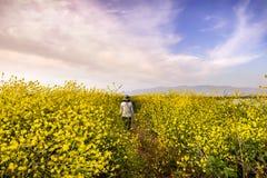 Pessoa não identificada que anda em um trajeto alinhado com os wildflowers do negro do Brassica da mostarda preta, área de San Jo fotografia de stock royalty free