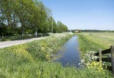 A pessoa na bicicleta passa flores de florescência na estrada secundária entre Utrecht e Houten em holland Imagem de Stock Royalty Free