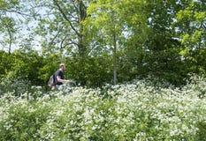 A pessoa na bicicleta passa flores de florescência na estrada secundária entre Utrecht e Houten em holland Imagens de Stock Royalty Free