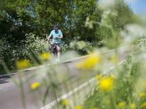 A pessoa na bicicleta passa flores de florescência na estrada secundária entre Utrecht e Houten em holland Foto de Stock