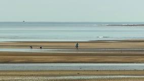 Pessoa que anda na praia com dois cães video estoque