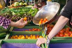 Pessoa que compra tomates frescos em um mercado da exploração agrícola Fotografia de Stock