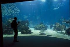 Pessoa que olha o tanque principal do aquário de Lisboa Fotos de Stock