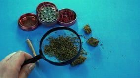 A pessoa que olha os bot?es m?dicos da marijuana com lupa A junção do moedor e da marijuana está no fundo video estoque
