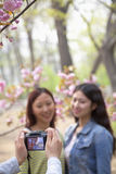 A pessoa que toma uma foto de duas jovens mulheres fora em um parque entre a mola floresce Fotografia de Stock Royalty Free