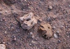 Pessoas das pedras Foto de Stock