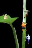 Pessoas pequenas que escalam a árvore gigante Foto de Stock Royalty Free