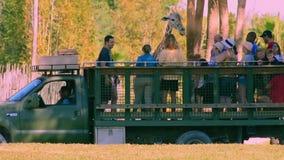 Pessoas que dão a folha da alface ao girafa no safari de Serengeti em jardins de Busch video estoque