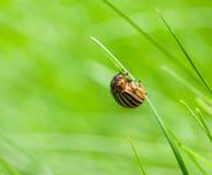 Pest bag on grass Royalty Free Stock Photo
