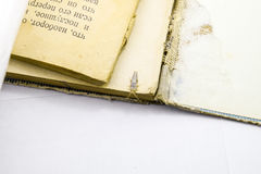 Pest books and newspapers. Insect feeding on paper - silverfish Stock Photos