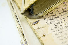 Pest books and newspapers. Insect feeding on paper - silverfish Royalty Free Stock Image