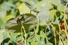 Pest Stock Photos