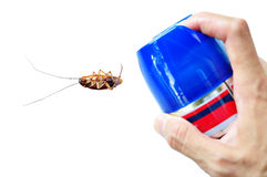 Pest Control. By Spraying on Cockroach Royalty Free Stock Images