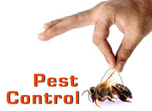 Free Pest Control Royalty Free Stock Image - 24844656