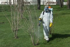 Pest control expert spraying pesticide on small tree in a garden royalty free stock photos