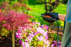 Pest Control in the Garden. Gardener Spraying Garden Flowers Stock Photo