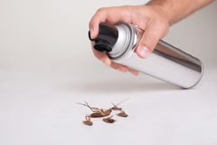 Pest Control. Hand spraying pesticide, with dead cockroaches Royalty Free Stock Image