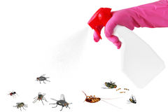 Pest control Royalty Free Stock Image