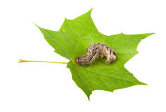 Pest and leaf Stock Images