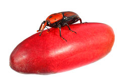 Pest Stock Images