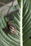 Pest or Snail. Close Up of Pest or Snail on a green leaf Stock Images