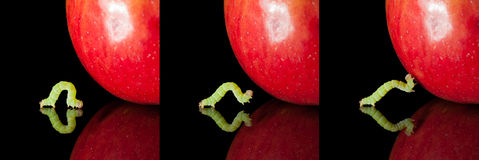 Pest worm an apple collection Royalty Free Stock Photography