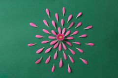 Pestals rosados del gerbera en fondo verde foto de archivo libre de regalías