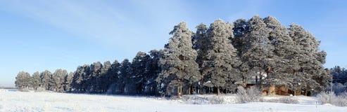 Pesterevskaya树丛冬天 库存照片
